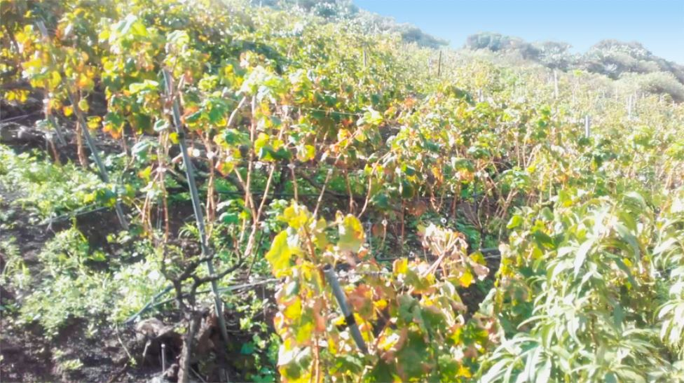 bodega de vinos en gran canaria